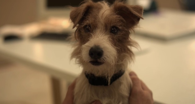 "Cosmo the dog in ""Beginners"""