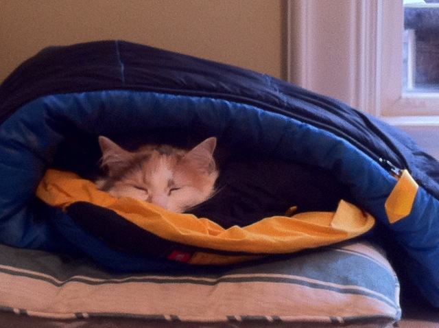 Jellybean in a sleeping bag