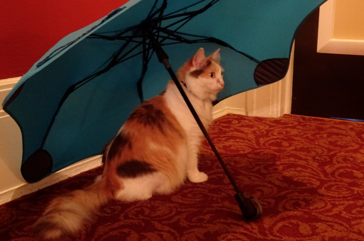 Jellybean and the umbrella