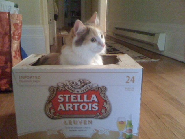 Jellybean in a Stella Artois box