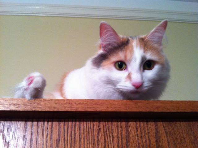 Jellybean on the bookshelf