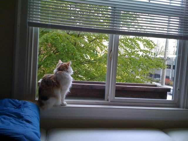 Jellybean, sans pigeon, at window.