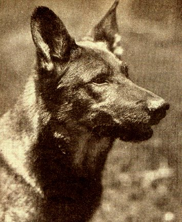The original Rin Tin Tin in 1927